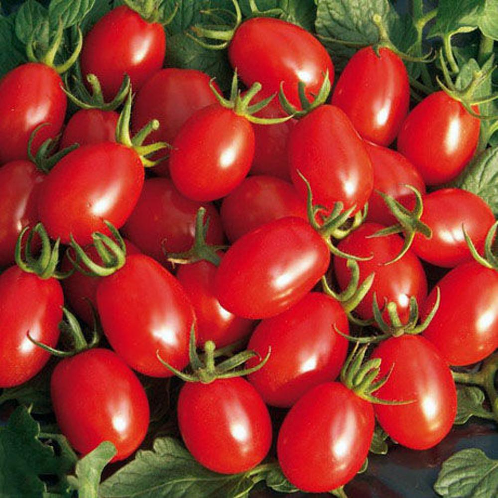 تصویر گوجه چری خوشه ای